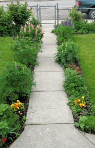 The flowers provide a path