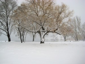 during blizzard in the park