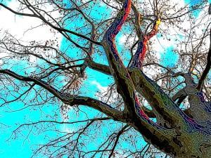 Chestnut tree wants spring
