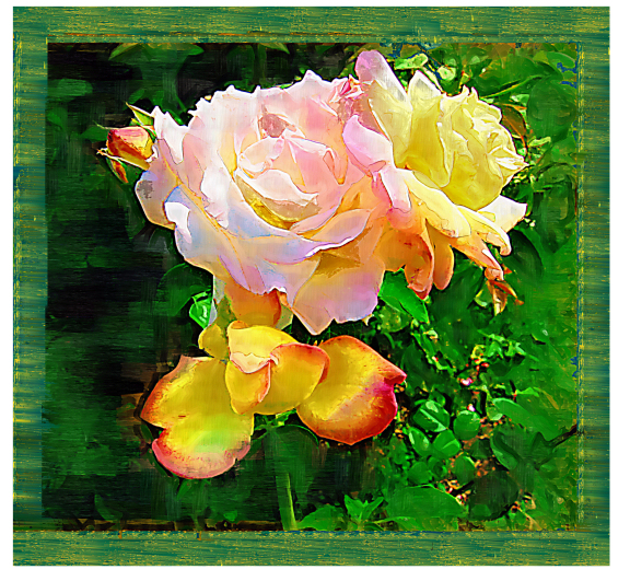 The peace of Roses: Peace Rose