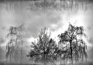 winter trees in a dark sky