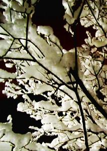 snow trees 3 thumb sharp